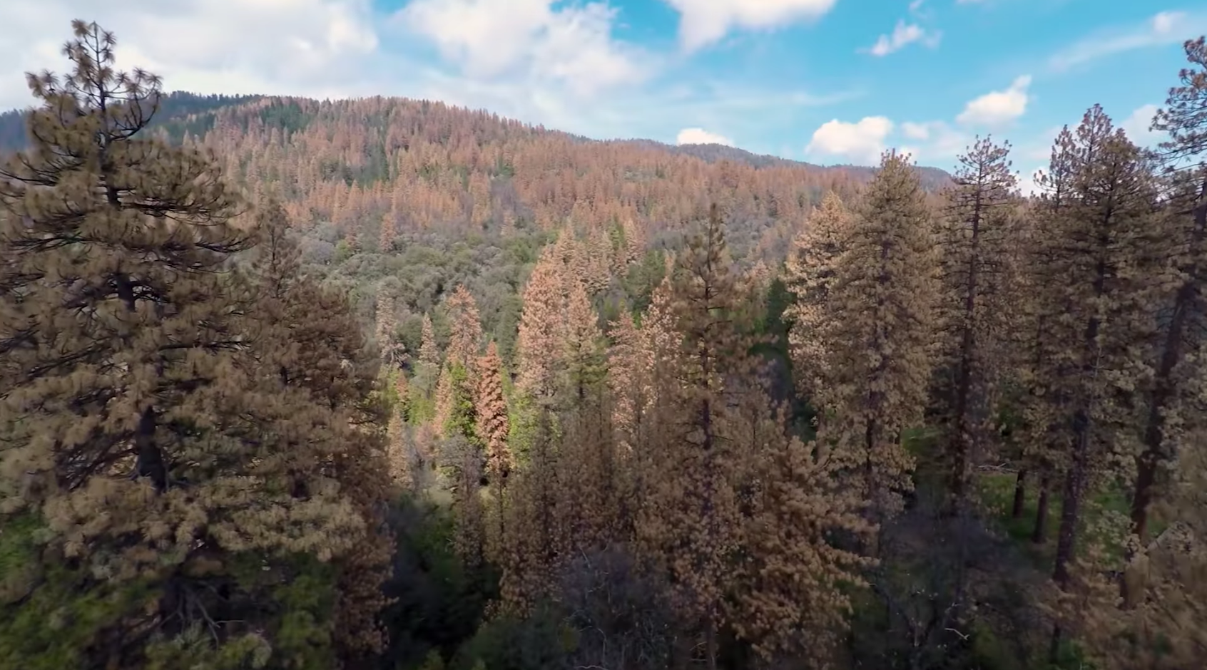 66 Million Dead Trees Increase California Wildfire Risk