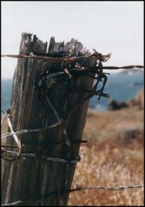 Barbed-Wire-Fence-210×300.jpg