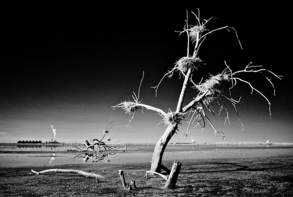 Osceola_Refetoff_Dead_Tree_Nests_Thermal_Plants_IR_2014-2.jpg