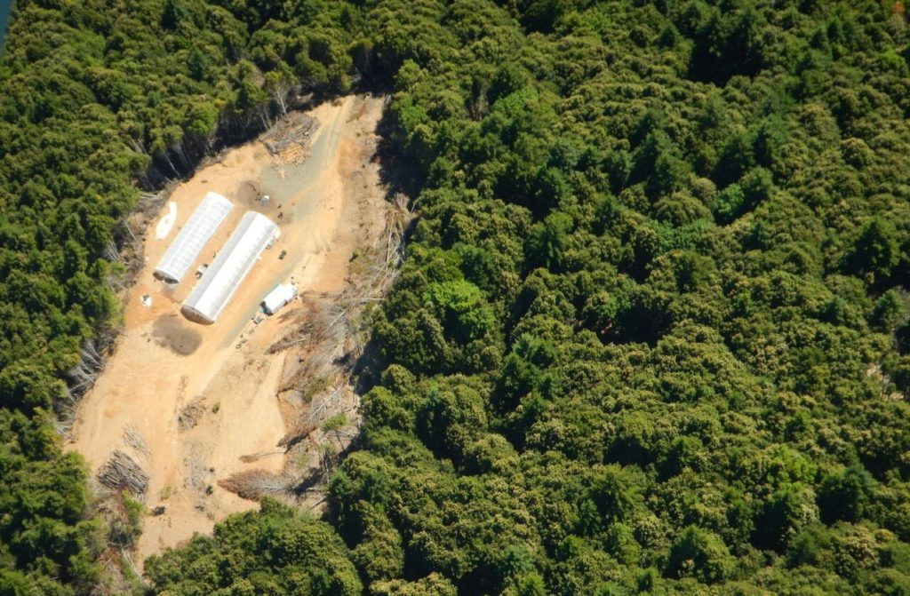 Forest cleared for marijuana greenhouse complex